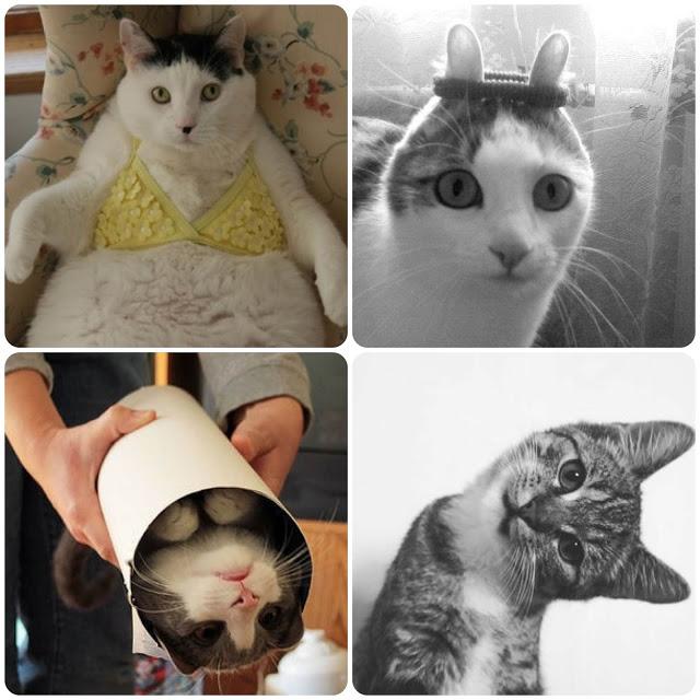 fotos de gatos, gatos do tumblr, fotos engraçadas, montagens,