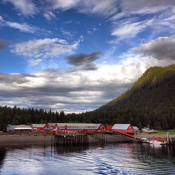 alaska, alasca, viagem, estados unidos, neve, neve, helicóptero, navio, giovana quaglio, celebrity cruises, celebrity century,