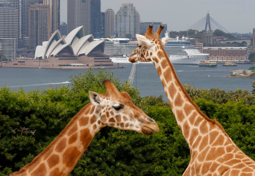celebrity solstice, australia, zoo, celebrity cruises