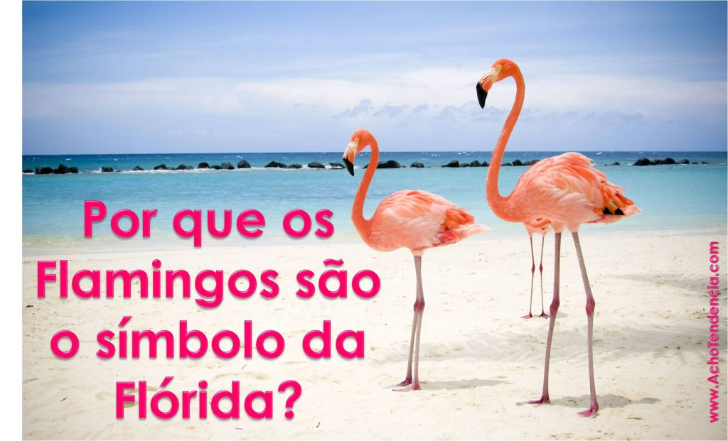 flamingo, florida, passaro, rosa, pink, porque, simbolo, miami, orlando,