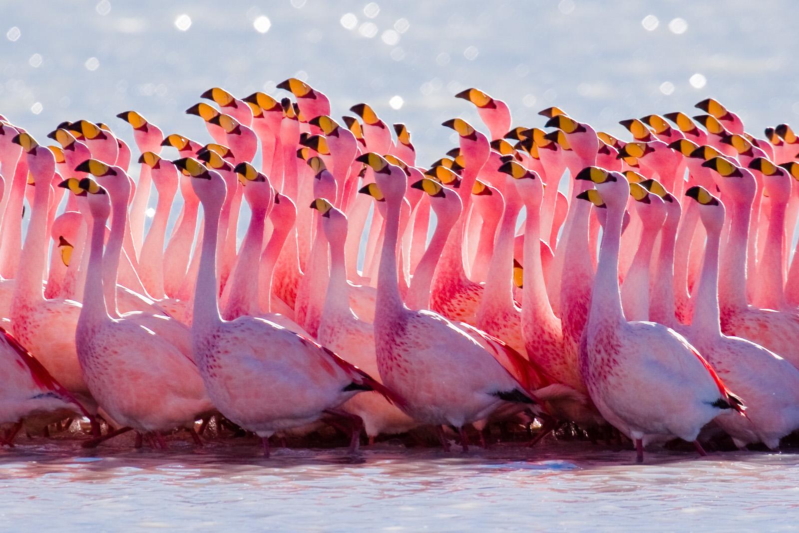 flamingos, simbolo, florida, miami,