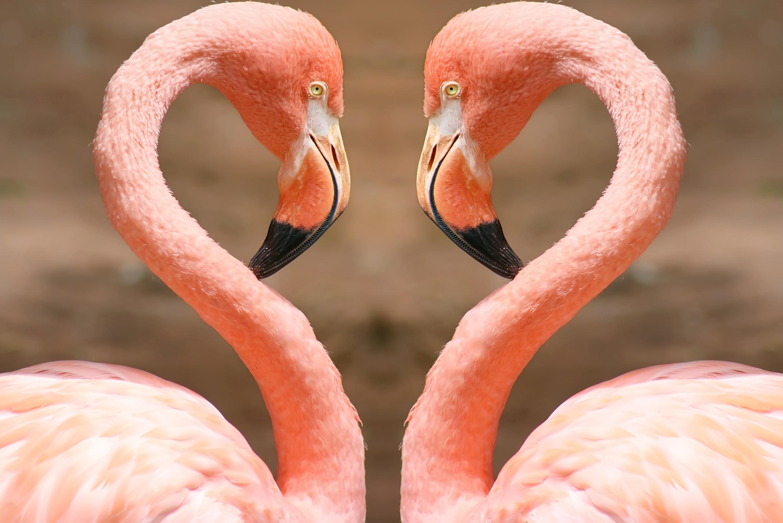 por que os flamingos são o símbolo da flórida acho tendência