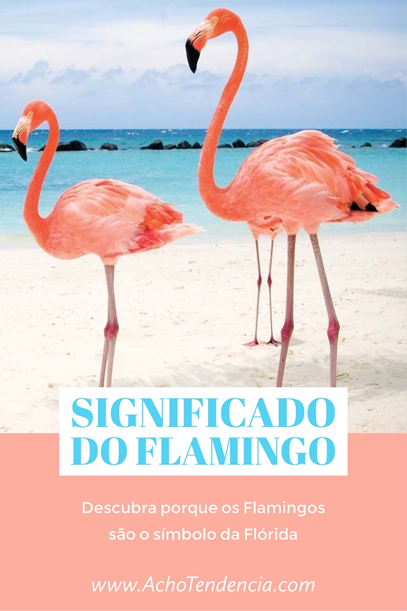 flamingo, florida, passaro, rosa, pink, porque, simbolo, miami, orlando, flamingos